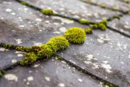 Spring Roof Protection from Moss